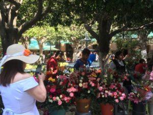 The Day of the Flowers, Jardín de la Unión.